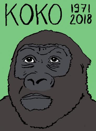 mort de Koko le gorille, dessin, portrait, laurent jacquy,répertoire des macchabées célèbres,mort d'homme,